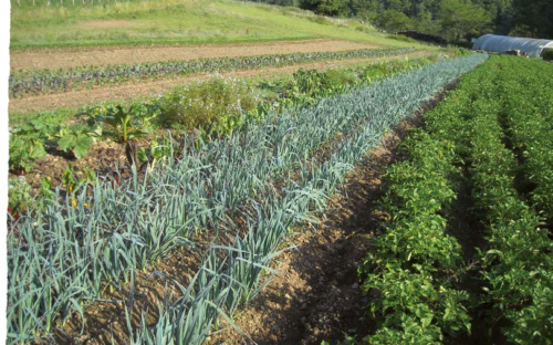 Se former en maraîchage agroécologique