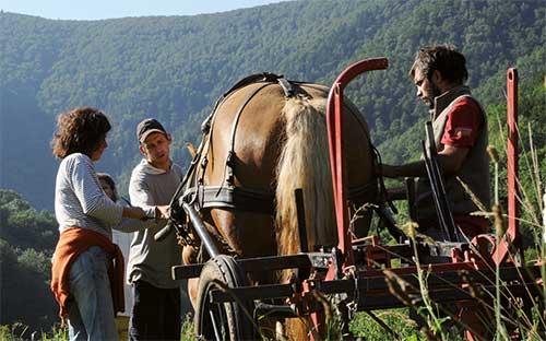 Accompagnement personnalisé en traction animale : Éducation de votre cheval de travail - Maraîchage