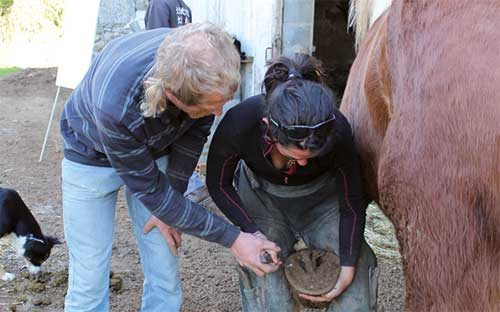 Initiation au parage des chevaux : Entretenir son cheval pieds nus