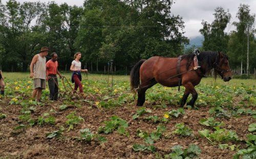 S'initier à la traction animale avec les chevaux et mûrir son projet